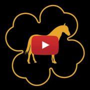 Falabella Stoeterij Los Quatros Video